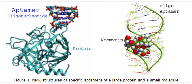 Aptamers From Gene Link