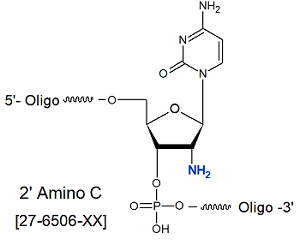 picture of 2'-Amino-C