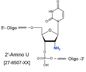 picture of 2'-Amino-U