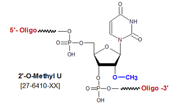 picture of 2'-O methyl uridine U