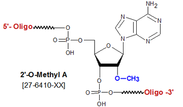 picture of 2'-O methyl adenosine A
