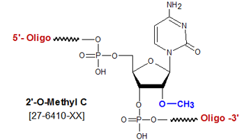 picture of 2'-O methyl cytosine C
