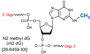 picture of N2-Methyl dG (m2dG)