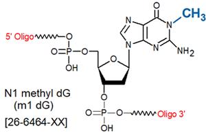 picture of N1-Methyl dG (m1dG)