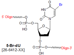 picture of 5-bromo deoxyuridine (Br-dU)