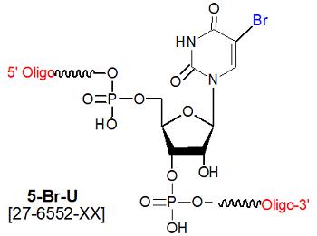 picture of 5-bromo ribouridine (5-Br rU)