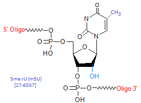 picture of 5-Methyl-Uridine (m5U)