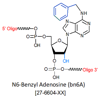 picture of N6-Benzyl Adenosine (bn6A)